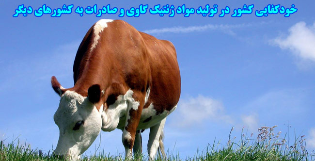 brown-cow-and_279658